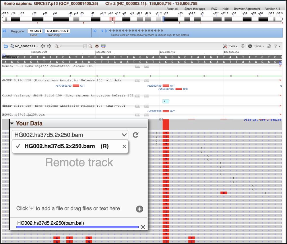 Remote BAM file loaded as track in GDV