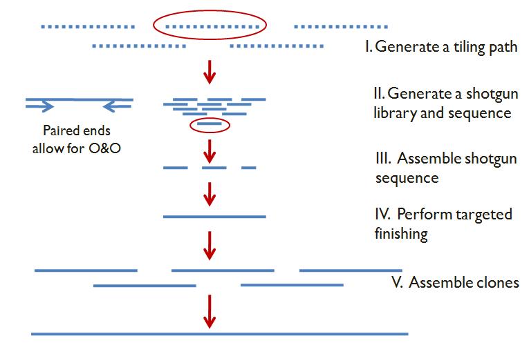 NCBI retires Clone DB