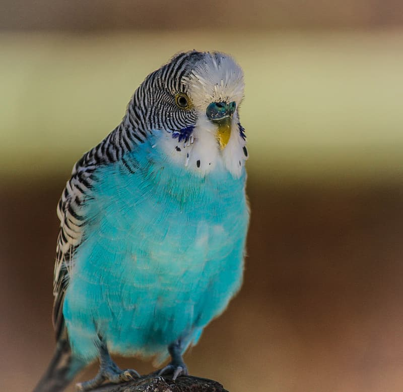 close-up-photo-of-white-and-blue-bird