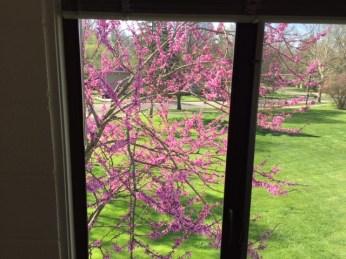 anderson room window