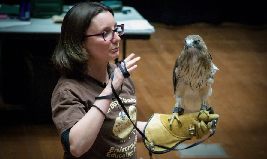 Birds of Prey Presentation