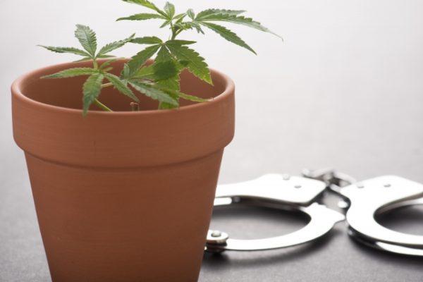 マリファナ・大麻合法化