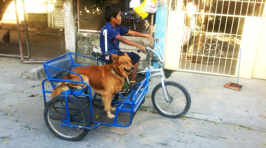 Pedicab(ペディキャブ)
