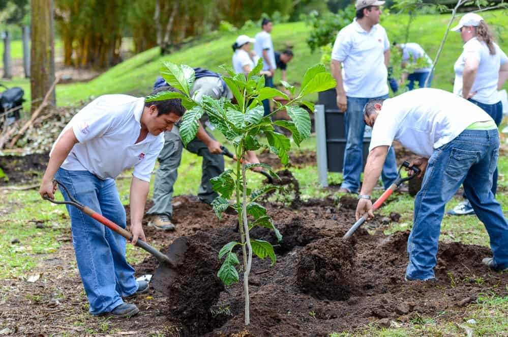 6 Ways to Celebrate Arbor Day in a Time of Social