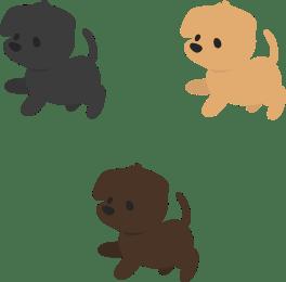 Chibi Labradors