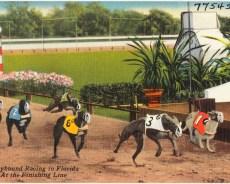 Florida amendment 13 could ban dog-racing