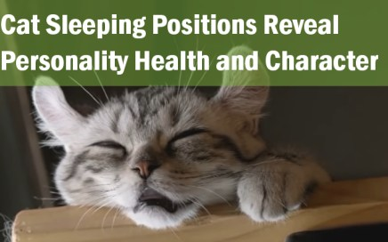 cat_sleeping_positions_reveal_personality_health_and_character_jaw dropping facts