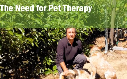 the need for pet therapy_dr john la puma