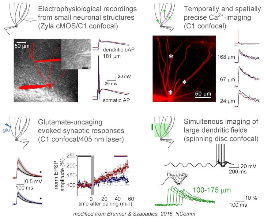 Analogue modulation of back-propagating action potentials enables dendritic hybrid signalling