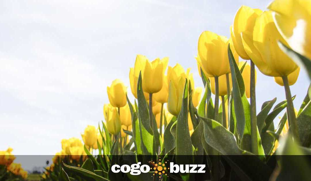 3 Easy Spring Marketing Ideas