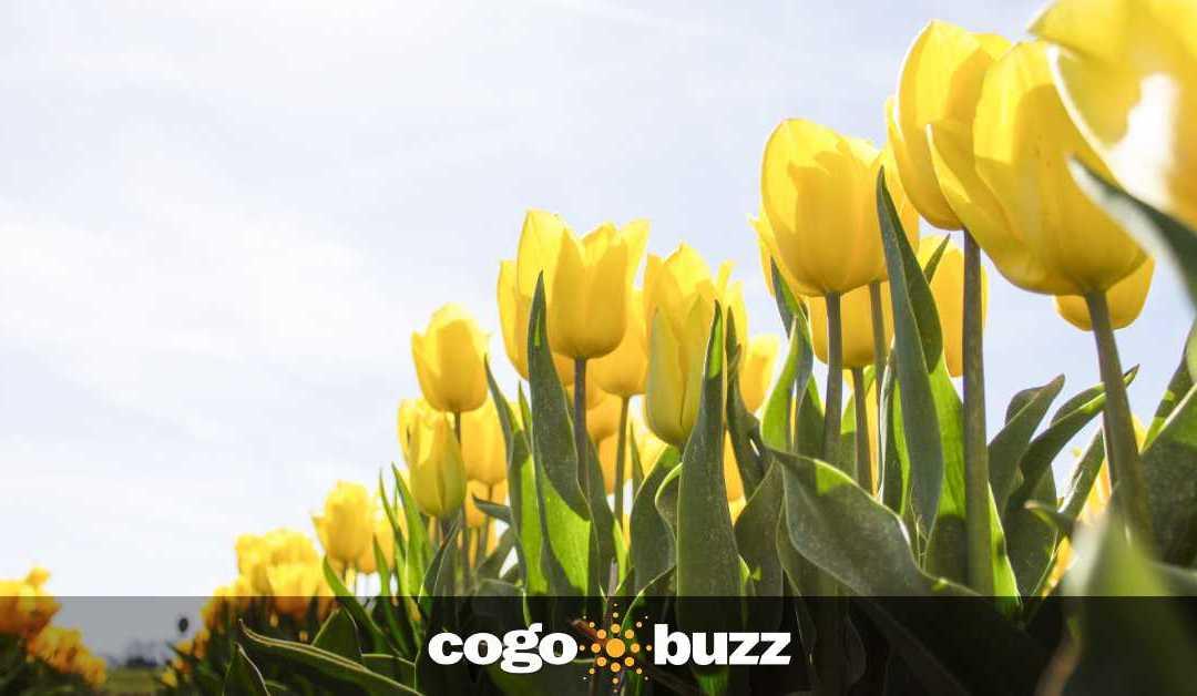 3 Easy Spring Marketing Ideas