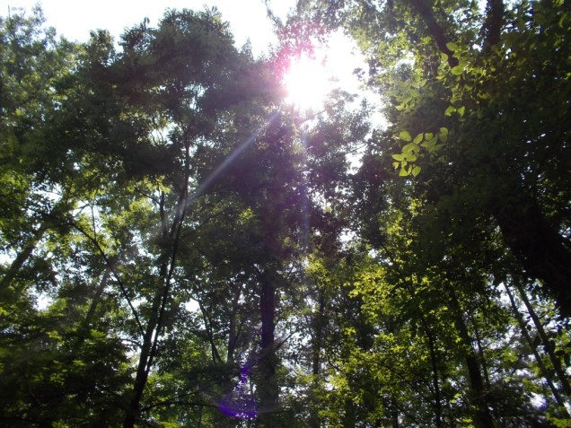 A lovely day in the sun under the forest canopy on Buckquarter Trail at Eno River State Park