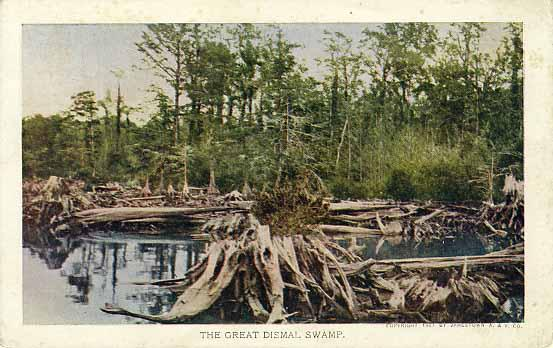 Image result for Great Dismal Swamp postcard