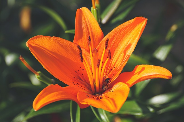 North Cyprus Gardening Tricks That Can Work For Anyone!