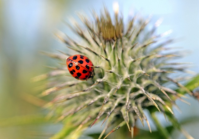 Excellent Article With Many Great Tips About Northern Cyprus Pest Control