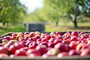 Excellent Tips For Growing An Organic Garden