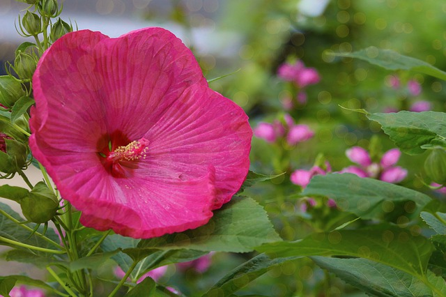 Using The Right Plants In Your Landscaping In North Cyprus