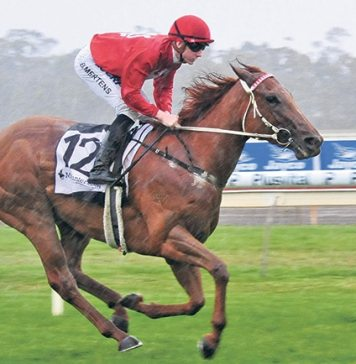Arrogant win: Super Snob (Beau Mertens) well clear of their rivals at Bendigo last Wednesday. Photo: Racing Photos