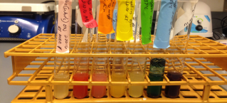 Bacterial cultures (photo 1.5)