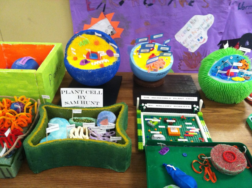 medium resolution of 6th grade Plant and Animal Cells   Northpoint Christian School