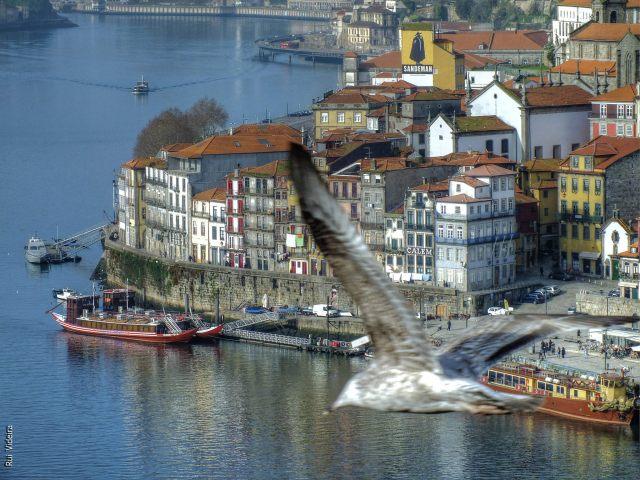 Porto - Rui Videira