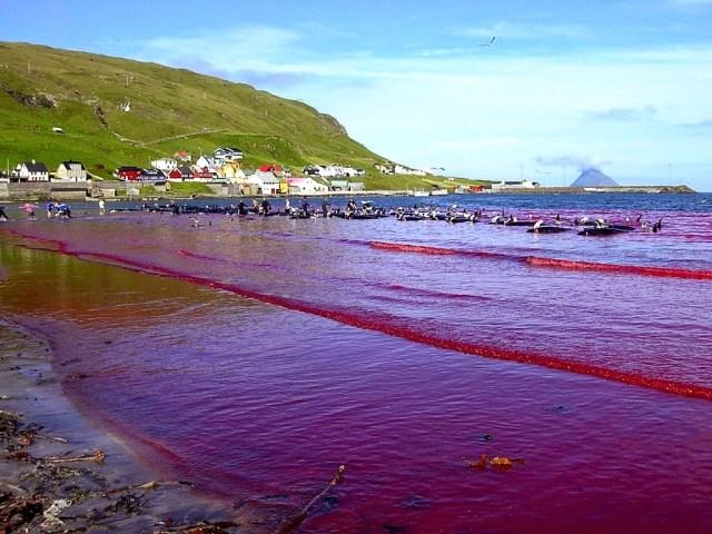Marés Vermelhas