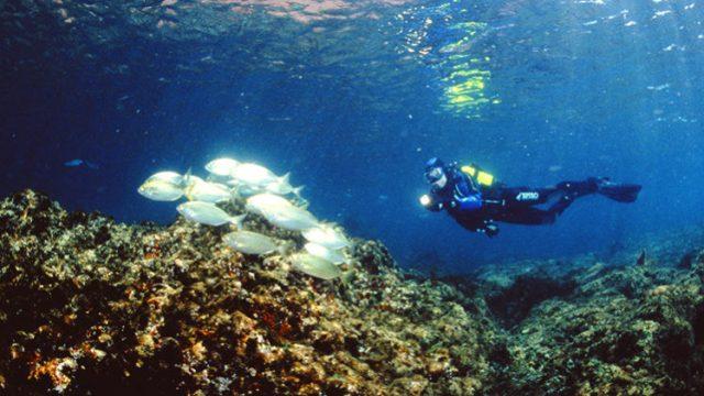 maravilhosas Ilhas das Berlengas