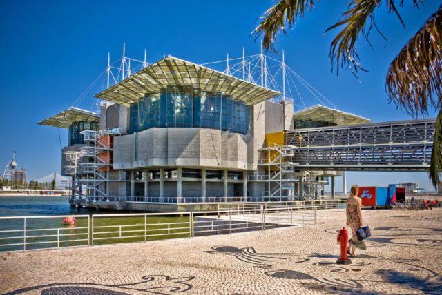 Oceanário de Lisboa eleito o melhor do mundo