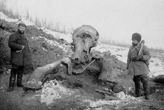 O Mistério do Mamute de Beresovka