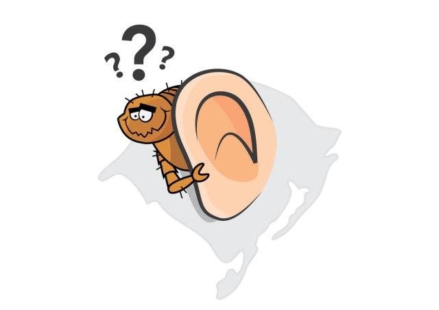 7 animais escondidos na língua portuguesa