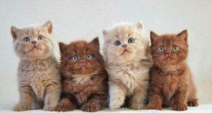 """Saiba a forma correta de calcular a idade """"humana"""" do seu gato"""