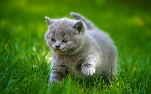 10 coisas proibidas para quem tem gatos