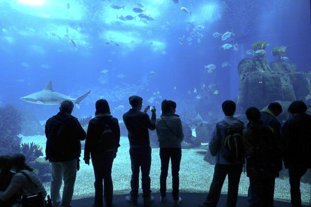 O que dizem os turistas sobre o Oceanário de Lisboa - ©Wikimedia Commons