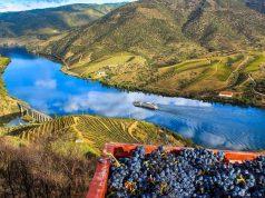 Vinho do Porto: tudo o que precisa saber