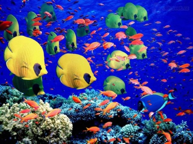 Great Barrier Reef, Austrália