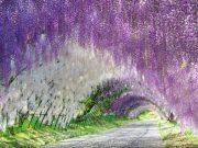 É português um dos 22 lugares onde a natureza enlouqueceu com as cores