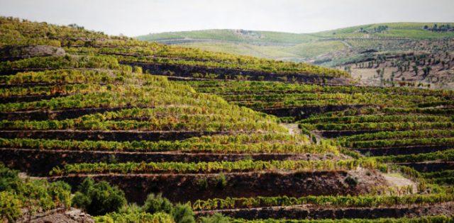 Colinas do Douro