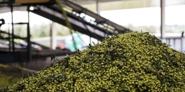 azeites no Brasil é português