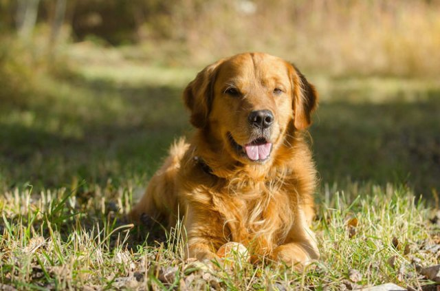 coisas que não deve fazer a um cão