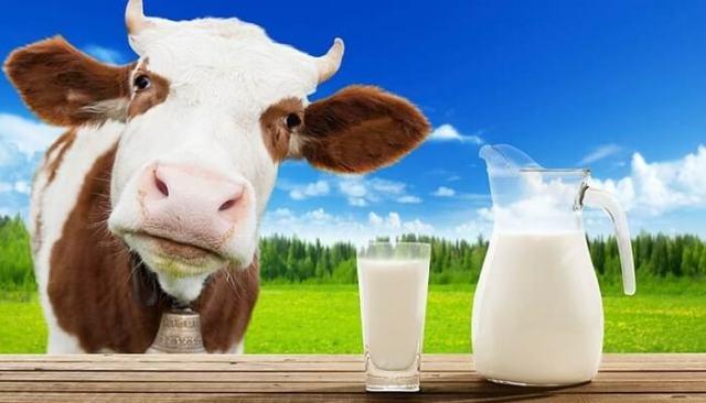 Leite de vaca