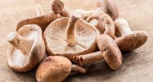 Descubra os tipos e benefícios dos Cogumelos