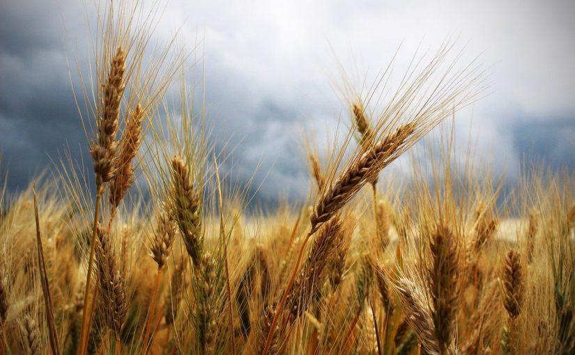 Aufbruch: Das Weizenkorn muss sterben