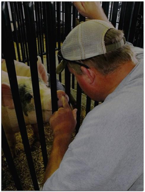 Pig Dog at the Fair, Super Friendly pig, loved him