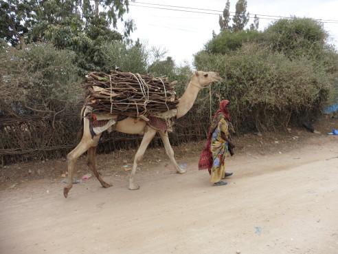 ...και μία καμήλα!