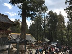 Inside Toshoku Srine In Nikko Nearby Tokyo (World Heritage Site)