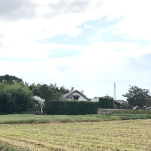 Seeing Tonoike Sake Brewery from rice fields