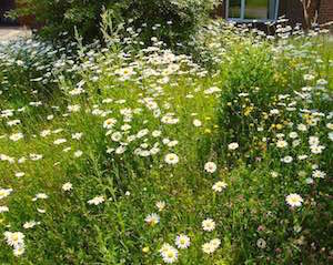 The meadow in it's third year