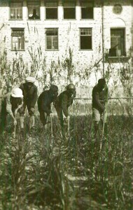 Boys working in the onion field at Syra Orphanage. Syra, which housed 3,000 orphans, also functioned as an agricultural school. The gardens, fields, and livestock helped the orphanage to be self-sufficient while teaching the children valuable skills.