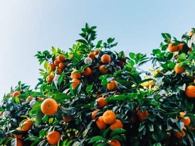 Pomarańcze i small talki