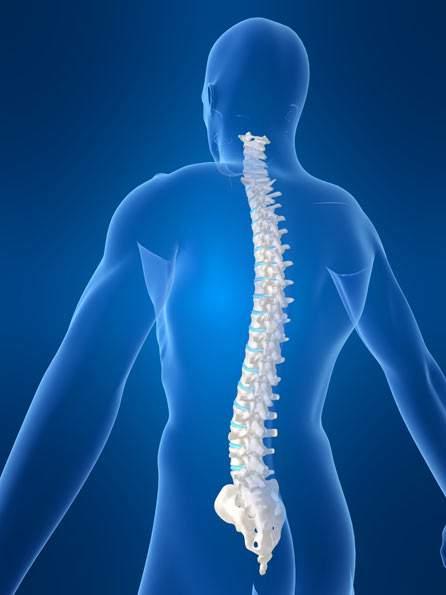 influența coloanei vertebrale asupra erecției